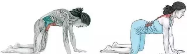 瑜伽猫牛式